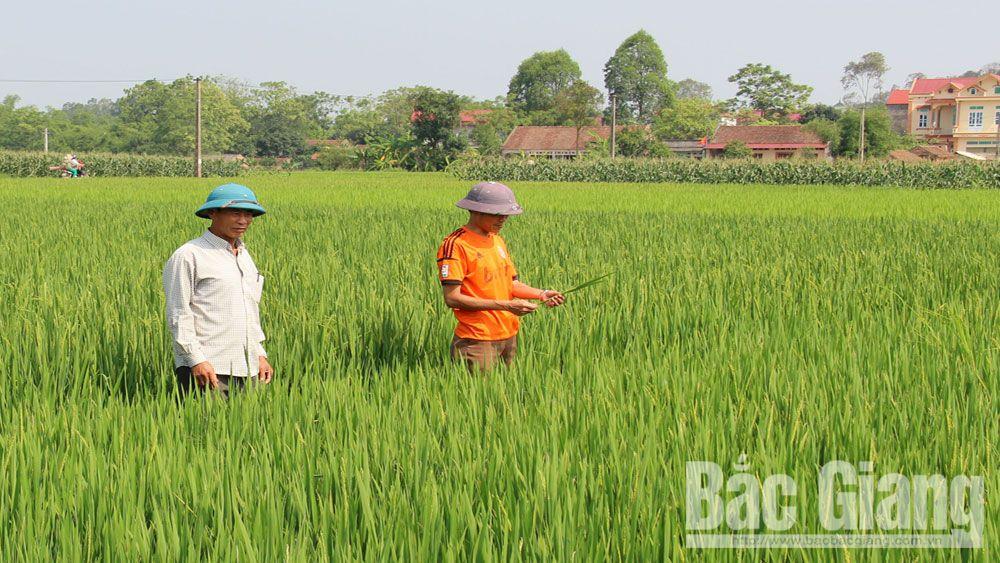 Nhờ đoàn kết lương - giáo, thôn Hà Thượng, xã Thượng Lan dồn điền đổi thửa xong 70 ha đất canh tác.