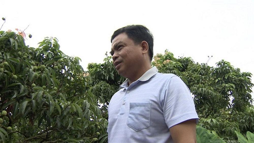 Anh Nguyễn Văn Quyên ở Lục Ngạn, Bắc Giang chia sẻ về việc chuyển đổi trồng lúa sang trồng vải.