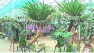 Chiêm ngưỡng vườn lan khủng tại TP Bắc Giang