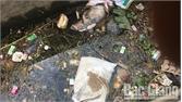 Xác lợn tiếp tục trôi về địa bàn phường Xương Giang (thành phố Bắc Giang)