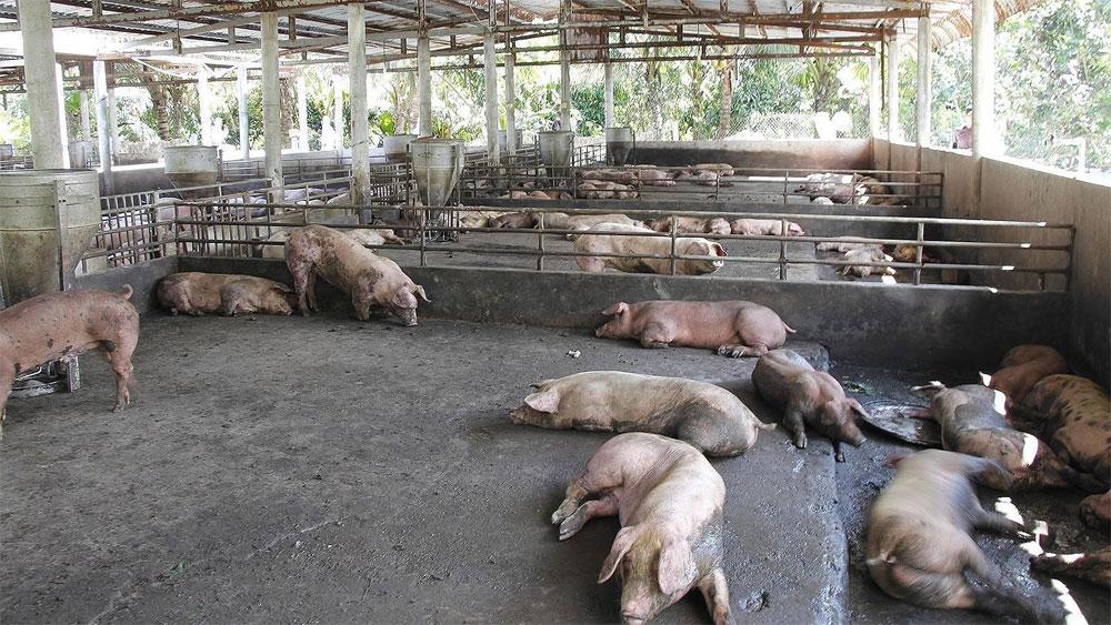 Dịch tả lợn châu Phi gây thiệt hại trên 3.600 tỷ đồng