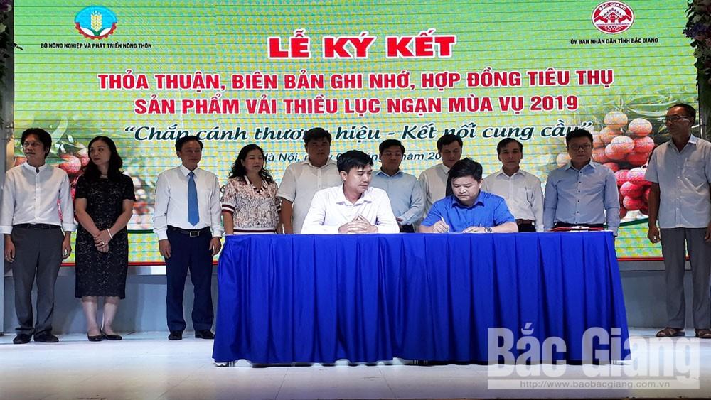 Khai mạc Tuần lễ vải thiều Lục Ngạn tại Hà Nội