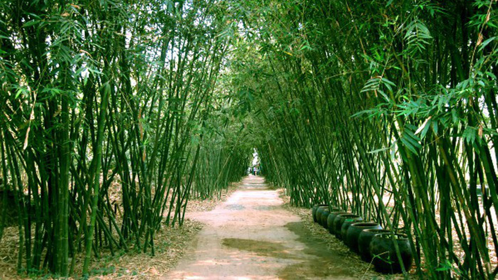 First bamboo village in Vietnam a living museum