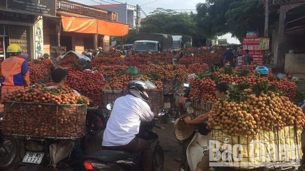 Lychee enjoys stable selling price
