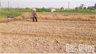 Lạm dụng thuốc trừ cỏ: Lợi bất cập hại