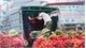 Vụ vải thiều năm nay: Nông dân Bắc Giang vui như hội