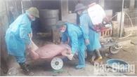 Hỗ trợ thiệt hại do dịch bệnh trên đàn lợn: Bảo đảm chặt chẽ, đúng đối tượng