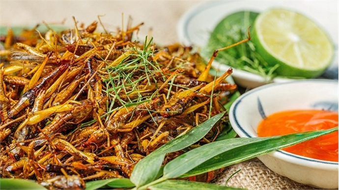 Roasted grasshoppers – delicacy from the rice harvest