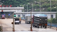 Mỗi ngày có hàng nghìn tấn vải thiều xuất khẩu sang Trung Quốc qua tỉnh Lào Cai