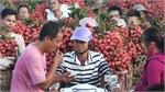 Vietnam farmers enjoy lychee export price surge