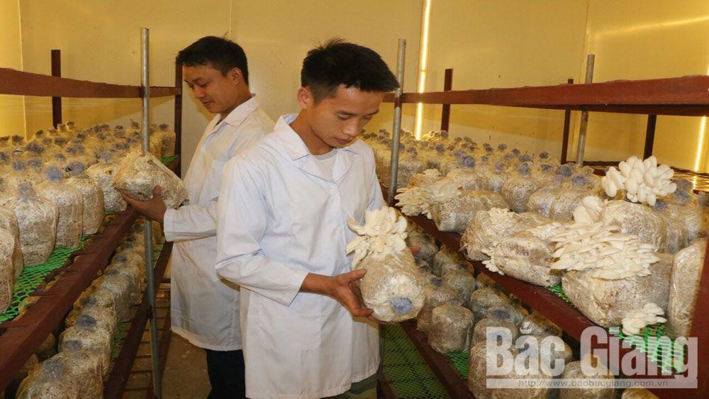 trồng nấm, sản xuất nấm, nấm, Bắc Giang, nấm ăn