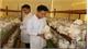 Bắc Giang phát triển nghề trồng nấm: Cần đầu tư đồng bộ, mở rộng quy mô sản xuất