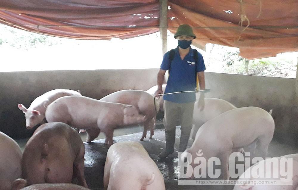 Phòng chống bệnh dịch tả lợn châu phi, Dịch tả lợn châu Phi, Thuốc bổ trợ chăn nuôi, chăn nuôi lợn ở Bắc Giang, thế đại
