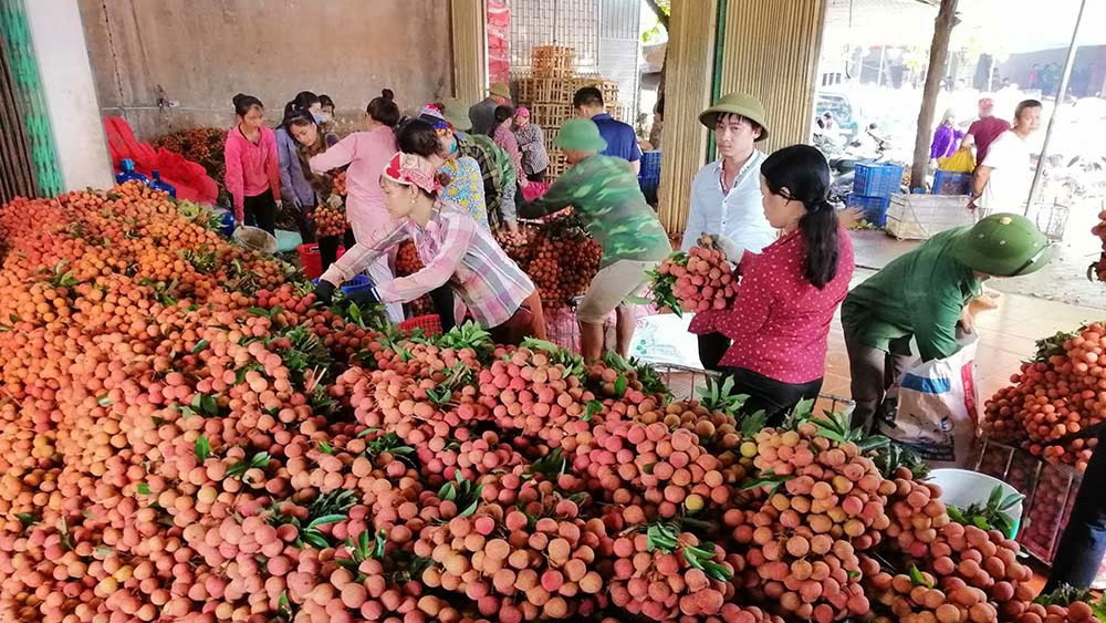 Luc Ngan exports over 42,000 tonnes of lychee