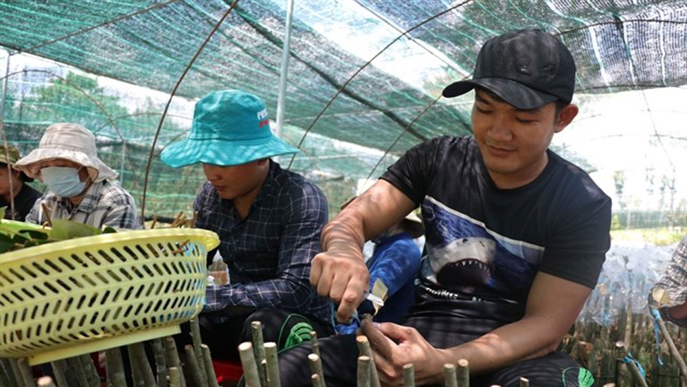 Mekong Delta, quality breed sources, fishery, fruit and rice, key aquatic species,  top export products, high-quality tra fish breeds