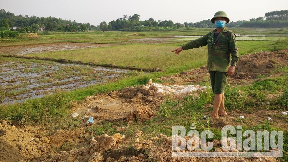 Dịch tả lợn châu phi, Huyện Tân Yên, Bắc Giang, Tiêu hủy lợn bệnh không rõ nguồn gốc