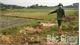 Tân Yên: Cảnh cáo, buộc tiêu hủy gần 4 tấn lợn bệnh, không rõ nguồn gốc