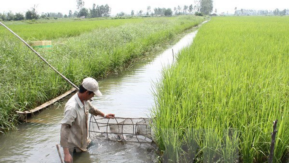 Ca Mau to spend 11.2 million USD on efficient farming models