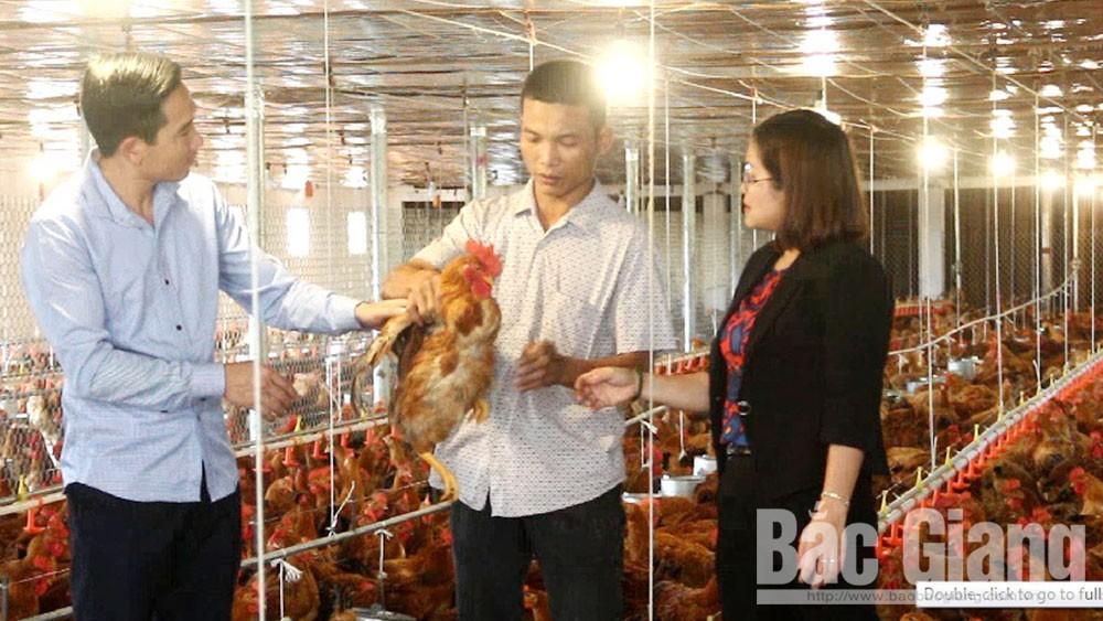 Bắc Giang, Hiệp Hòa, Đinh Văn Hải, xã Thường Thắng, liên kết sản xuất,  gà sạch
