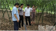 Tiếp tục có cơ chế chính, sách hỗ trợ các hợp tác xã phát triển sản xuất