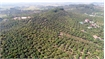 Over 100 ha of fruit trees in Tan Yen qualified as VietGAP standard