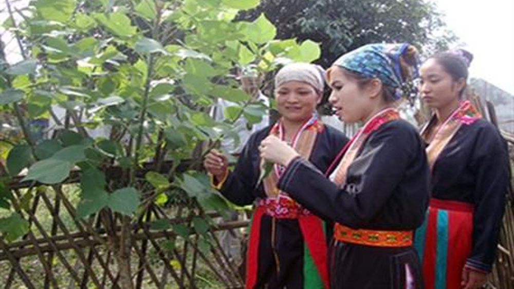 Bac Giang province, forest planters, rice support, national reserve, real demand, ethnic minority groups, voluntarily plant