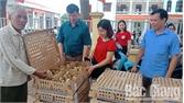Hỗ trợ nông dân nuôi gà an toàn sinh học