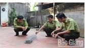 Bàn giao cá thể rắn hổ mang cho cơ quan kiểm lâm Bắc Giang