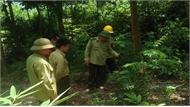 Thả cá thể rắn hổ mang về Khu bảo tồn thiên nhiên Tây Yên Tử
