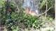 Cháy lớn suốt 5 tiếng đồng hồ, 3ha rừng bị thiêu rụi