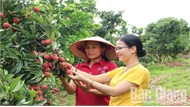 Bắc Giang: Thu về hơn 6,3 nghìn tỷ đồng từ vải thiều và các dịch vụ phụ trợ