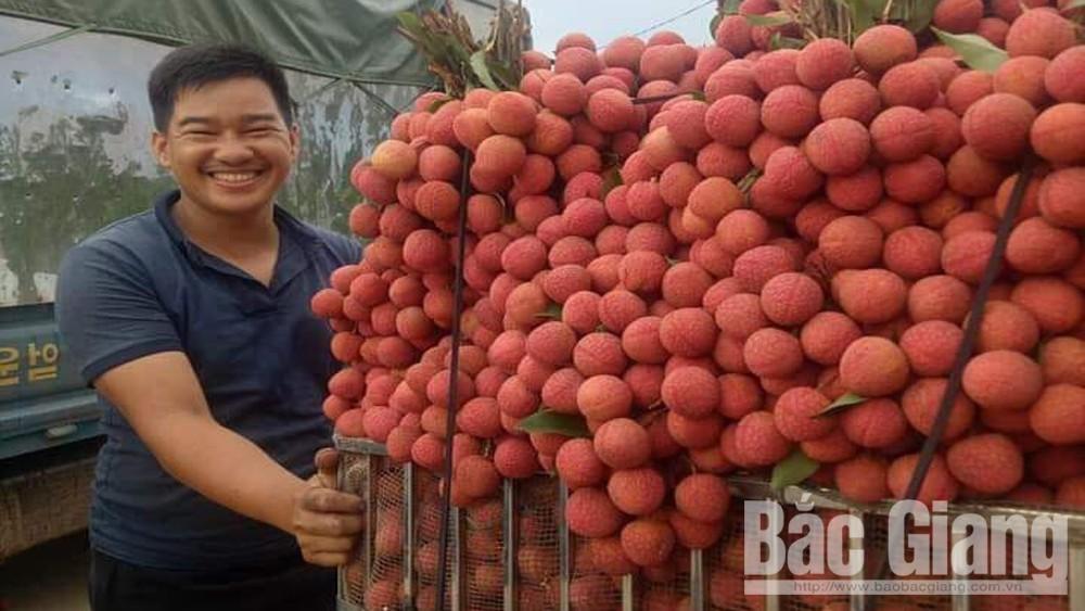 Nông dân xã Tân Sơn (Lục Ngạn) phấn khởi bán vải thiều được giá.