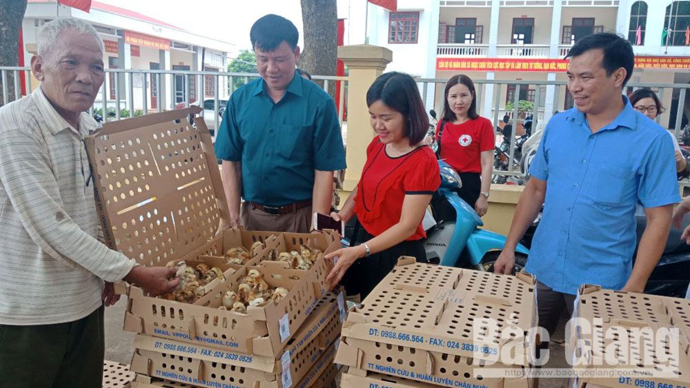 Bac Giang province, bio-safety model, chicken breeding model, Agriculture Encouragement Center, product consumption