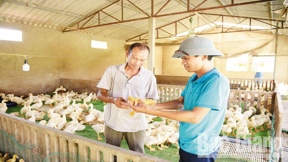Ông Sửu (bên trái) được cán bộ thú y xã Ngọc Sơn hướng dẫn cách nhận biết bệnh dịch ở vịt.