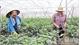 Bac Giang builds more than 90 hi-tech farming models