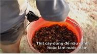 Dùng 500 chai nhựa bắt cáy ở Thanh Hóa
