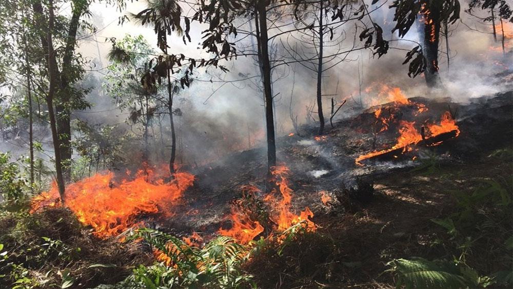 Khởi tố, người phụ nữ, đốt cỏ, gây cháy rừng ở Hà Tĩnh, Nguyễn Thị Hảo