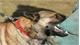 Bé gái 22 tháng tuổi bị chó cắn tử vong