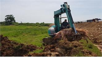 Cả nước chỉ còn Ninh Thuận chưa phát hiện dịch tả lợn châu Phi