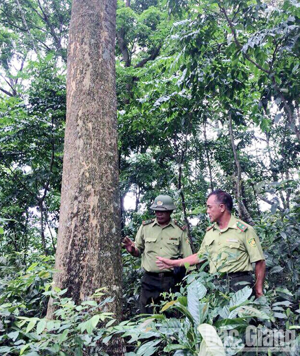 Lục Nam, Bắc Giang, Hữu Lũng, Lạng Sơn, rừng giáp ranh,  quản lý, bảo vệ rừng, Lục Ngạn