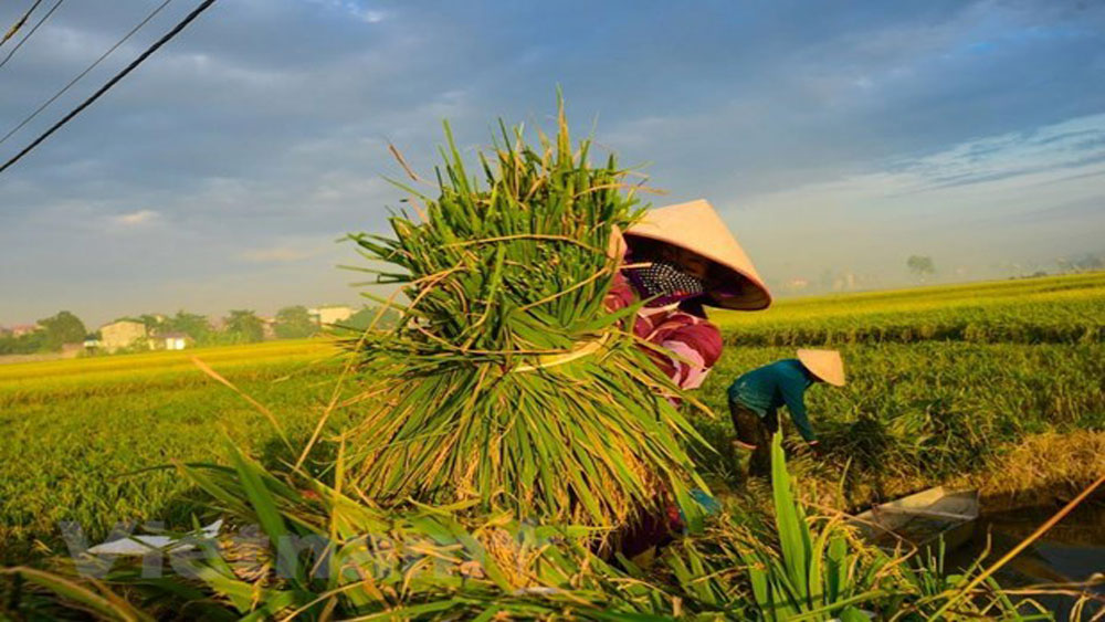 RoK, Vietnam, rice value chain, cooperation agreement, cultivation capacity, farming technologies, non-refundable assistance package