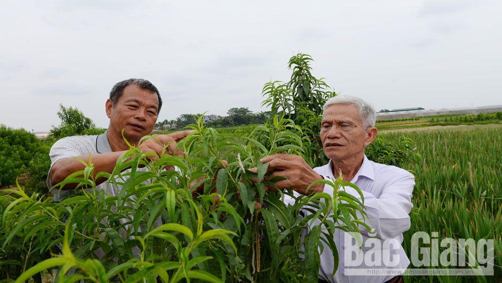 Hội Sinh vật cảnh tỉnh Bắc Giang,  CLB hoa và cây cảnh Bắc Giang, sinh vật cảnh, cây cảnh
