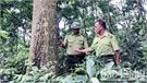Lục Nam phối hợp bảo vệ rừng giáp ranh