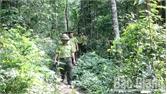 Bắc Giang: Khai thác gỗ trái phép, dùng dao chém cán bộ kiểm lâm