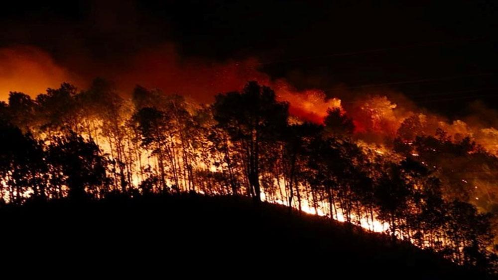 Đốt lửa, lấy mật ong gây cháy rừng, ba nông dân, bị bắt giam