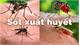 Bộ Y tế khuyến cáo người dân phòng bệnh sốt xuất huyết