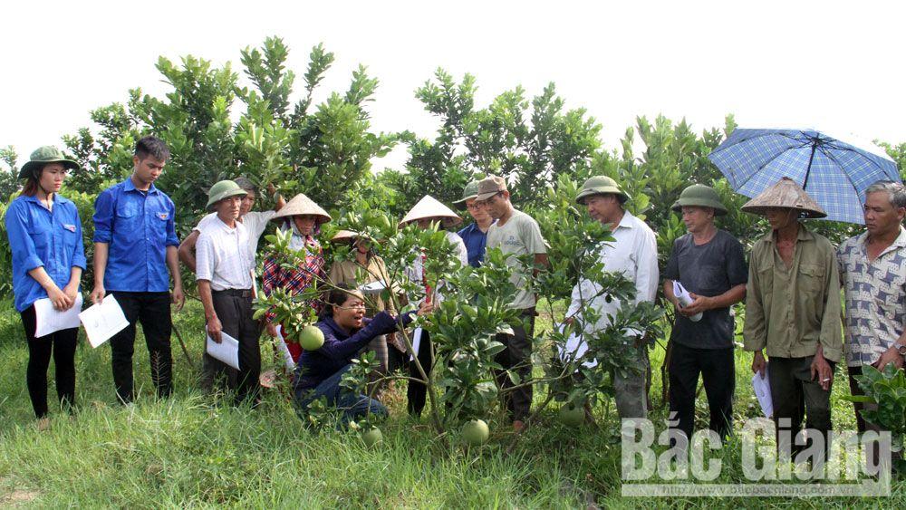 Việt yên, tỉnh đoàn Bắc Giang, ra quân mùa hè xanh, thanh niên tình nguyện