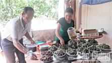 Phòng ngừa ngộ độc thực phẩm đông người