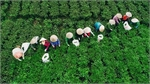 Vietnam's finest tea producer teems with other natural delights