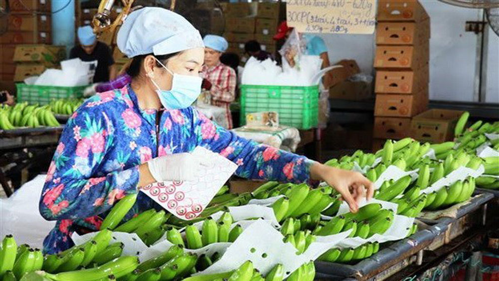 Over 491 million USD invested in processing farm produce in H1